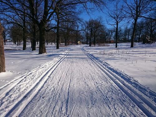 Новогодняя лыжня 2018